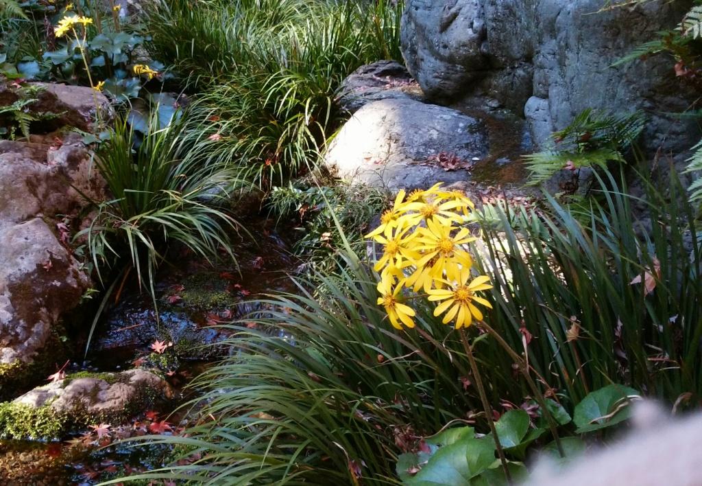 生前のままの針箱石蕗の花