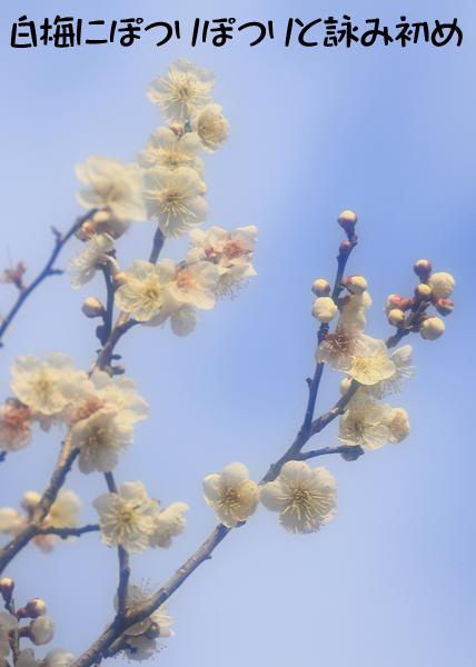 白梅にぽつりぽつりと詠み初め